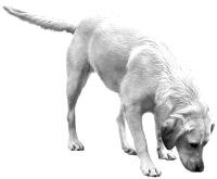 Therapiehund Kea